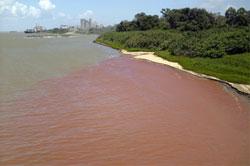 Contaminación del r�o Orinoco, Venezuela  Marzo 11, 2008 Foto de WilliamUrdaneta