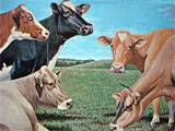 Vacaslecheras